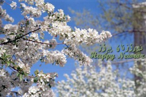 Happy Newroz, the beginning of Spring and a New Year